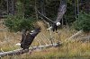 -yellowstone-28-october-2018-eagles-01-small.jpg