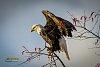 -eaglefallfb-5176.jpg