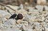 -dung-beetles-k3__9951oct-03-2018.jpg