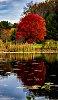 -red-tree.jpg.1-2.jpg