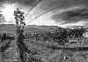 -wired-2359.jpg