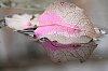 -flower-petal-water.jpg