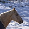 -kaylas-horse-1.jpg