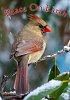 -jan-21-2015-snowbirds-013-3.jpg