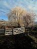 -hoar-frost-gates.jpg