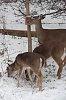 -00_deer_at_squirrel_feeder.jpg