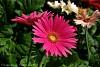 -7-16-07-flower-002a-800sig.jpg