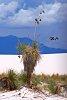 -white-sands-new-mexico.jpg