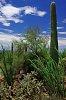 -1-saguaro.jpg