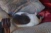 -napping_velcro.jpg