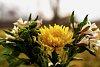 -flowers.jpg