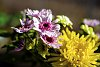 -flowers3.jpg