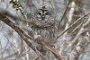 -owl1fb-14.jpg