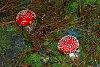 -fungi_10_fl.jpg