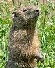-stand-groundhog-head-22june19.jpg