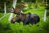 -moose20191fb.jpg