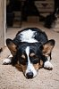 -dog-days-blues-1.jpg