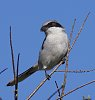 -_img1212-bird-riverbendtree2.jpg
