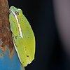 -tree-frog-small.jpg