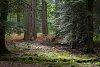 -blackwater-arboretum-28sept19_-061.jpg