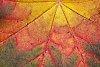 -leaf-abstract.jpg