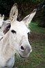-donkey.jpg