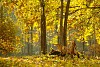 -fall-colors-6.jpg