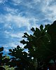 -figgy-sky.jpg