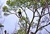 -tree-lopper-_2.jpg