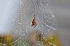 -rainy-spider.jpg