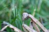 -praying-mantis-lovely-face-3-.jpg