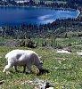 -mt_glacier_goat_and_lake.jpg