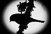 -bird-silhouette.jpg