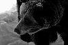 -bearb-w.jpg