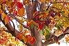 -fall_in_ca.jpg