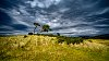 -scottish-savanna.jpg