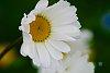 -floral.jpg