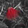 -don-red-800.jpg