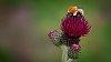 -highland-bee.jpg