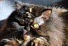 -0-gato.jpg