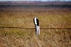 -osprey-post.jpg