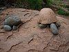 -rock-turtles.jpg