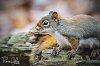 -imgp4905_untitled_11-10_squirrel_1110_19.jpg