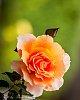 -flowers-14-14-.jpg