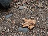 -leaf.jpg