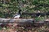 -two_ducks.jpg