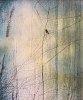 -pentax-1-abird-twig.jpg