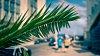 -palm-bokeh.jpg