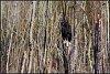 -black-vulture-2-rs.jpg