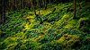 -damp-woodland.jpg